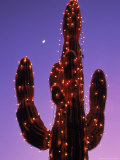 Lighted Wickenburg Cactus, AZ Photographic Print by Jeff Greenberg