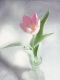 Pink Tulip in Vase Photographie par Michelle Joyce