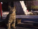 Stray Cats, Cozumel, Mexico Photographic Print by Debra Cohn-Orbach