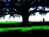Figure Standing Under a Tree, North Florida Photographic Print by Pat Canova