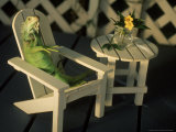 Green Iguana Sitting in Adirondak Chair Photographic Print by Jacque Denzer Parker
