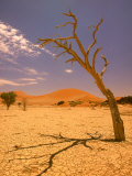 Tree in Namib Desert, Namibia Photographic Print by Walter Bibikow
