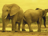 Elephants at Waterhole, Addo Elephant National Park, South Africa Photographic Print by Walter Bibikow