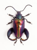 Close-up of Plastic Bug Photographic Print by Peter Ardito