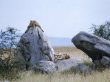 Lioness, Serengeti, East Africa Photographic Print by John Dominis