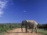 Elephant on Dirt Road, Addo Elephant National Park, South Africa Photographic Print by Walter Bibikow