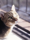 Portrait of Cat Photographic Print by Debra Cohn-Orbach