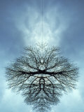 Tree Reflected in Water and Surrounded by Clouds Fotografie-Druck von Chris Rogers