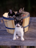 Kittens in Basket Outdoors Photographic Print by Greg Smith