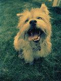 Small Dog Sitting on the Grass Photographic Print by Joseph Hancock