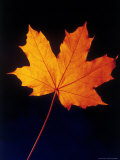 Autumn Leaf Photographic Print by Frank Chmura