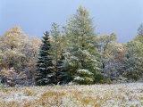 Jim Schwabel - Early Snow Along Rte 73, Adirondack Mountains, NY - Fotografik Baskı