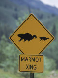 Marmot Crossing Sign, Aspen, CO Photographic Print by Cheyenne Rouse