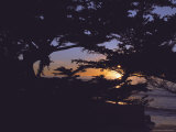 Sunset Through Tree, CA Photographic Print by Claire Rydell