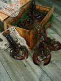 Lobsters Photographic Print by Martin Fox