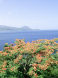 Flowers and Bay, Cabrits National Park, Dominica Photographic Print by Timothy O'Keefe