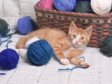 Kitten Playing with Balls of Yarn Photographic Print by David Davis