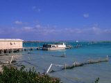 Conch Farm, Turks & Caicos Islands Photographic Print by Timothy O'Keefe
