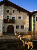 Sheep in Village, Graubunden, Switzerland Photographic Print by Walter Bibikow