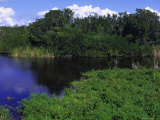 Everglades National Park, FL Photographic Print by Jeff Greenberg