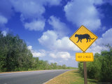 Road Sign of Animal Crossing, FL Photographic Print by Peter Adams