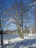 Winter Scenic, Michigan Photographic Print by Dennis Macdonald