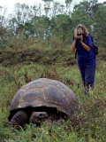 Woman and Giant Tortoise, Galapagos Island, Ecuador Photographic Print