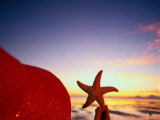 Starfish at Sunrise, Papua New Guinea Photographic Print by Stuart Westmorland