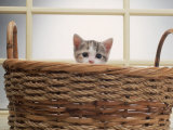 Kitten Peeking Out of Basket Photographic Print by Leslie Harris
