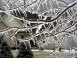 Close View of Tree Branches After Ice Storm Photographic Print by Dennis Macdonald