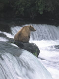 Brown Bear Fishing at Brooks Falls, Katmai National Park Photographic Print by Tom Dietrich
