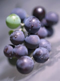 Grapes, Long Island, New York Photographic Print by John Glembin