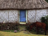 The Village Horse, Navala, Viti Levu Photographic Print by Walter Bibikow