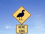 Nene Crossing Sign, Big Island, HI Photographic Print