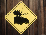 Moose Crossing Sign, CO Photographic Print