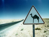Camel Crossing Sign Photographic Print by Peter Adams