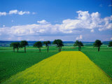 Mustard Field, Lower Austria Photographic Print by Walter Bibikow