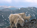 Mountain Goats, Western Wyoming Photographic Print by Bruce Clarke