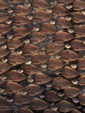Dried and Filleted Fish, Nazare, Spain Photographic Print by Bartomeu Amengual