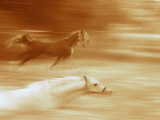 Horses Running Photographic Print