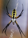 Spider on its Web Photographic Print by Jim McGuire