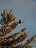 Lake, Birds Stampa fotografica di Keith Levit