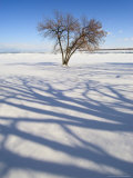Tree Among Snow with Shadow Photographic Print by Dennis Macdonald