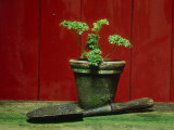 Parsley Planted in Aged Terracotta Pot Photographic Print by Andre Jordan