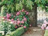 Pathway and Gate Low Clipped Box, Hydrangea Fotoprint van Jacqui Hurst