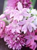 """Bunch 0F Allium Scoenoprasum, Allium Unifoloium & Allium Oreophilum """"Zwanenburg"""" Photographic Print by Lynn Keddie"""