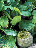 Bergenia Next to Stone Ball Covered in Moss, Perennial Photographie par Lynn Keddie