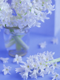 White Hyacinths in Vase with Flowers at Base Set Against Pale Blue Background Photographie par James Guilliam