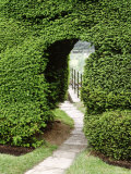 Arch in Taxus (Yew) Hedge Paving Slab Path Montacute, Somerset Fotografiskt tryck av Brian Carter