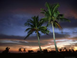 Coconut Palm, Florida, USA Photographic Print by Olaf Broders